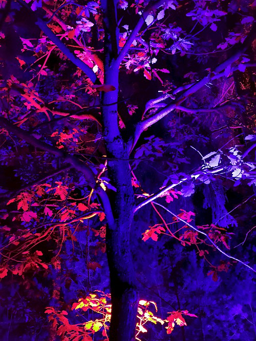 Red leaves in the darkness